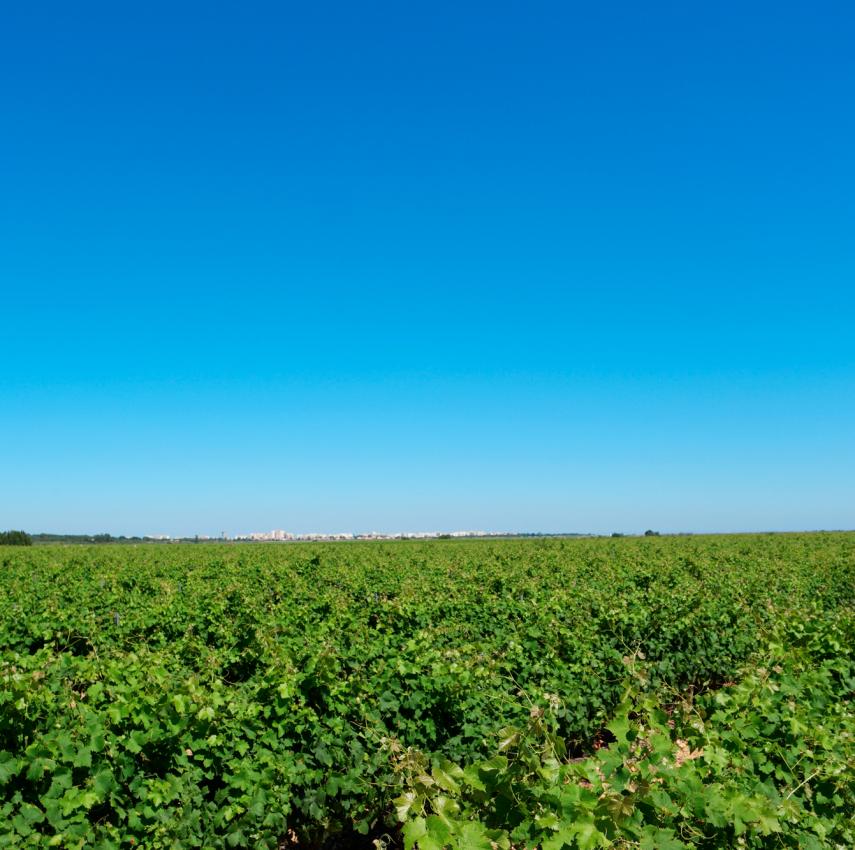 panoramique-vigne-chateau-des-hospices-canet-en-roussillon-66